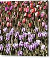Flower Splash Vi Canvas Print