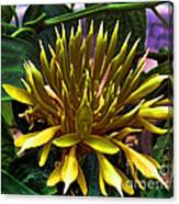 Flower - Sultry Dahlia - Luther Fine Art Canvas Print