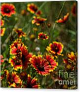 Texas Indian Blanket -  Luther Fine Art Canvas Print