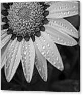Flower Water Droplets Canvas Print