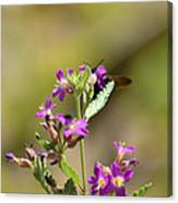 Flower With Bee Canvas Print