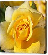 Flower-yellow Rose-delight Canvas Print