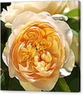Flower-yellow Roses Canvas Print