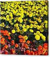 Flowerbed Of Narcissuses Canvas Print