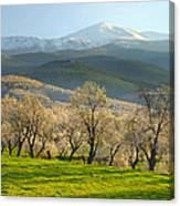 Flowering Almond At The Mountains Canvas Print