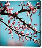 Flowering Branches Canvas Print