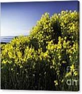 Flowering Bush Canvas Print