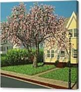 Flowering Crab Apple Tree Canvas Print