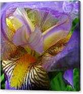 Flowering Iris Canvas Print