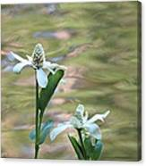 Flowering Pond Plant Canvas Print
