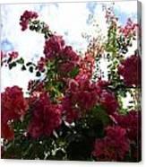 Flowering Skyward Canvas Print