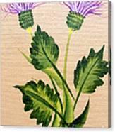 Flowering Thistle Canvas Print