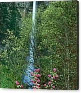 Flowering Tree Below Multnomah Falls Columbia River Gorge Nsa Oregon Canvas Print