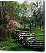 Flowering Trees In Bloom Along Fence Canvas Print