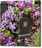 Flowering Vine  Canvas Print