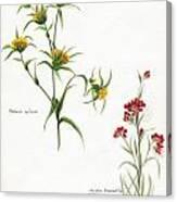 Flowers 1950 Canvas Print