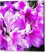 Flowers 2078 Oil Hp Canvas Print