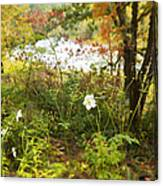 Flowers Along The River In Fall Canvas Print