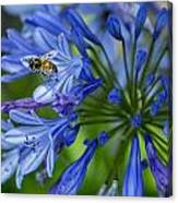 Flowers And Bee Canvas Print