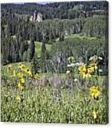 Flowers At Crested Butte Canvas Print