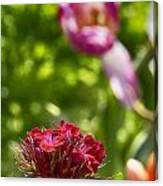 Flowers At Dallas Arboretum V14 Canvas Print