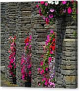 Flowers At Liscannor Rock Shop Canvas Print