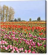 Flowers Blooming In Tulip Field In Springtime Canvas Print