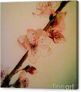Flowers - Cherry Blossoms - Blooms Canvas Print