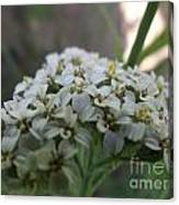 Flowers Close-up Canvas Print