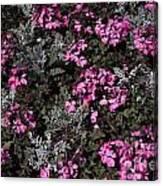 Flowers Dallas Arboretum V16 Canvas Print