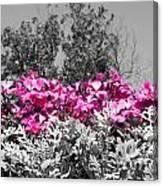Flowers Dallas Arboretum V17 Canvas Print