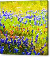 Flowers Field Background Canvas Print