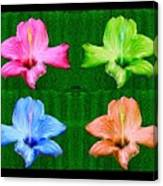 Flowers In Ireland Canvas Print