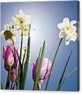Flowers In Sun Light Canvas Print