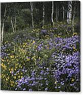 Flowers In The Aspen Forest Canvas Print