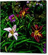 Flowers In The Garden 2 Canvas Print