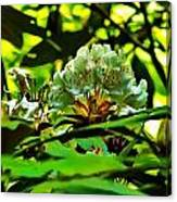 Flowers In The Woods Canvas Print