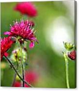Flowers Intwined  Canvas Print
