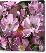 Flowers- Mass Roses Canvas Print
