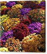 Flowers Near The Grand Palais Off Of Champ Elysees In Paris France   Canvas Print