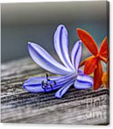 Flowers Of Blue And Orange Canvas Print