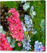 Flowers Of Pink And Blue Canvas Print