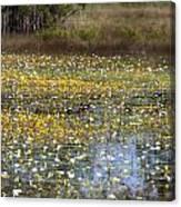 Flowers Of The Billabong Canvas Print