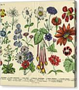Flowers Of The Garden, Victorian Canvas Print