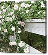 Flowers On Fence Canvas Print