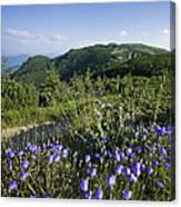 Flowers On Summer Mountain  Canvas Print