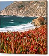 Flowers On The Coast, Big Sur Canvas Print
