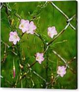 Flowers... On The Fence Canvas Print