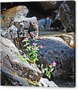 Flowers On The Rock Canvas Print