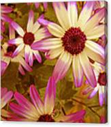 Flowers Pink And White Canvas Print